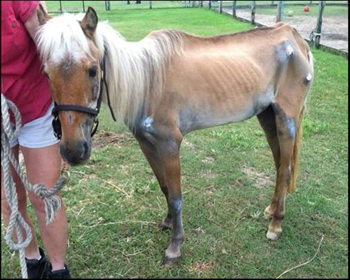 Our July Bucket Fund mare is Betsy Rose.  Click image to read her story and help!