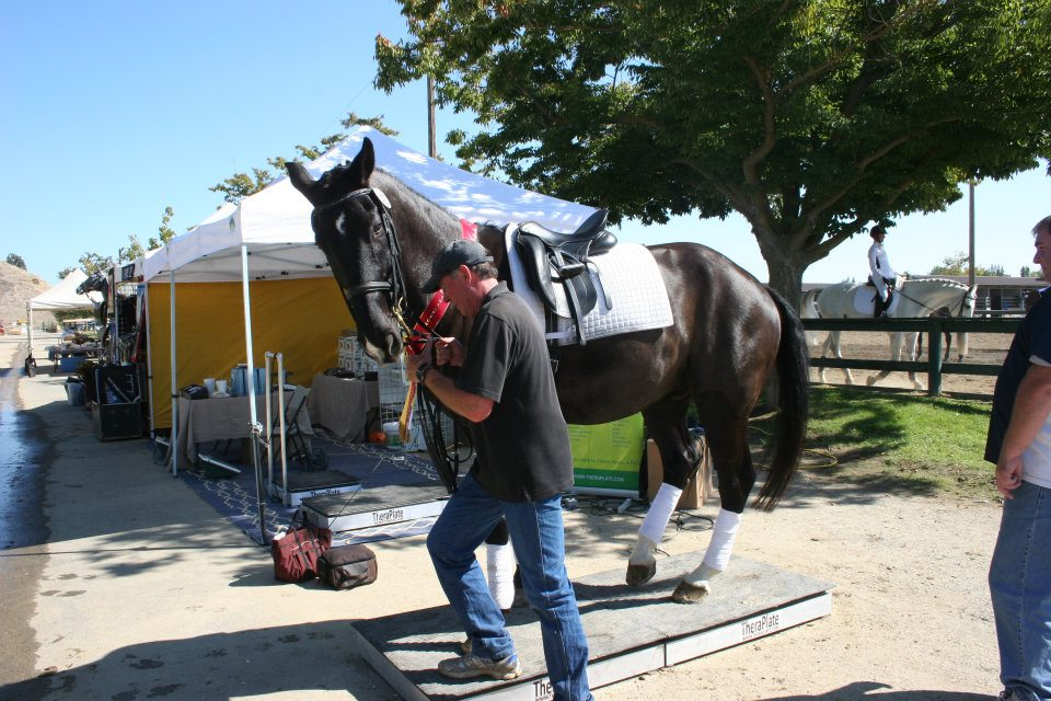 Another... I hear the Dressage world loves it! Helps so many suspensory and digital flexor issues - just like what Gwen suffered recently.