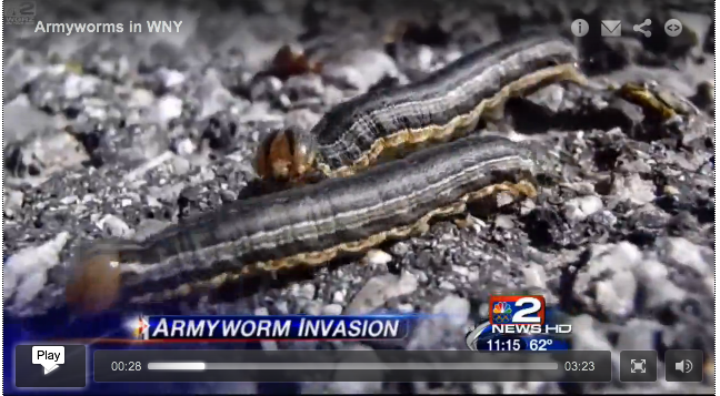 Click image to watch this amazing newscast about an army worm invasion in NY