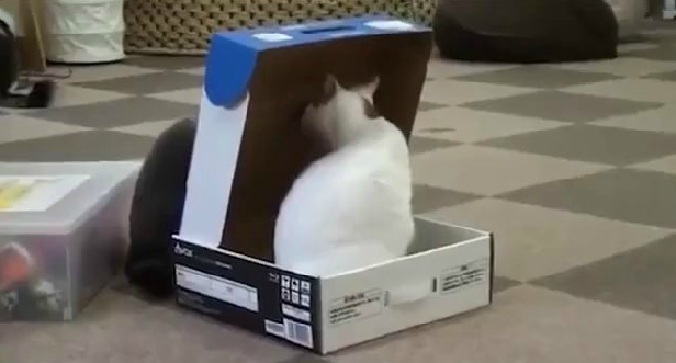 Click image to watch this compilation... all cat owners will relate!