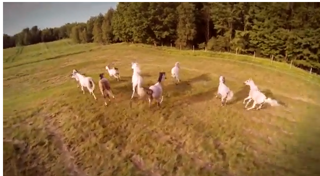 Click IMAGE to watch the Odysseo horses on V-A-C-A-T-I-O-N!