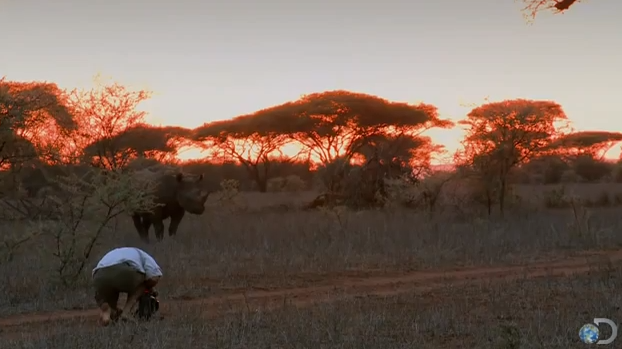 Yowsa!  Click image to watch this rhino charge the cameraman - who survives... but lordylordylordy!