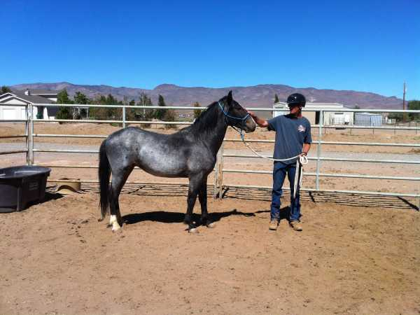 Fred with a beautiful roan student...