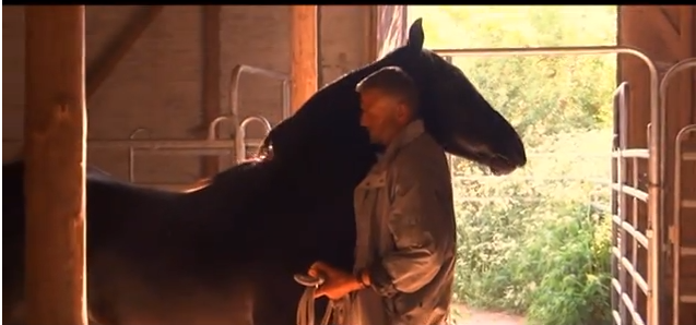 Click this image to watch the video of Klaus with the unruly stallion - later.