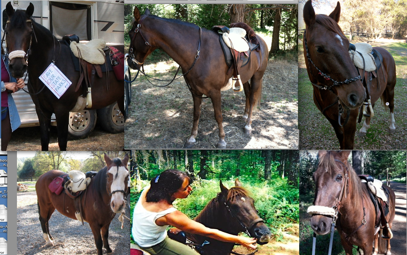 The top row (left to right) Gwen, Finn, Rojo. Bottom row: Remi,  Me with Aladdin, BG. All of them in my old Boz saddle.
