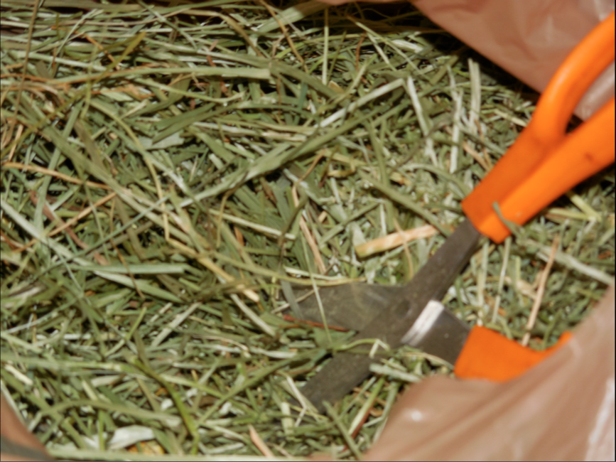 These are my fistfuls of meadow grass and my scissors - in a plastic bag.