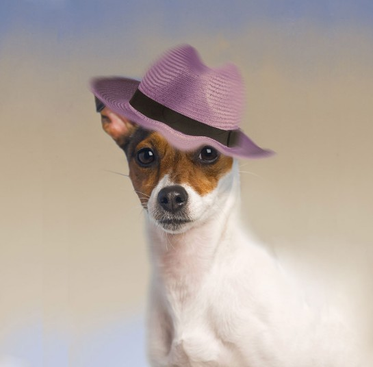 Dogs_in_hats_June_2737718k