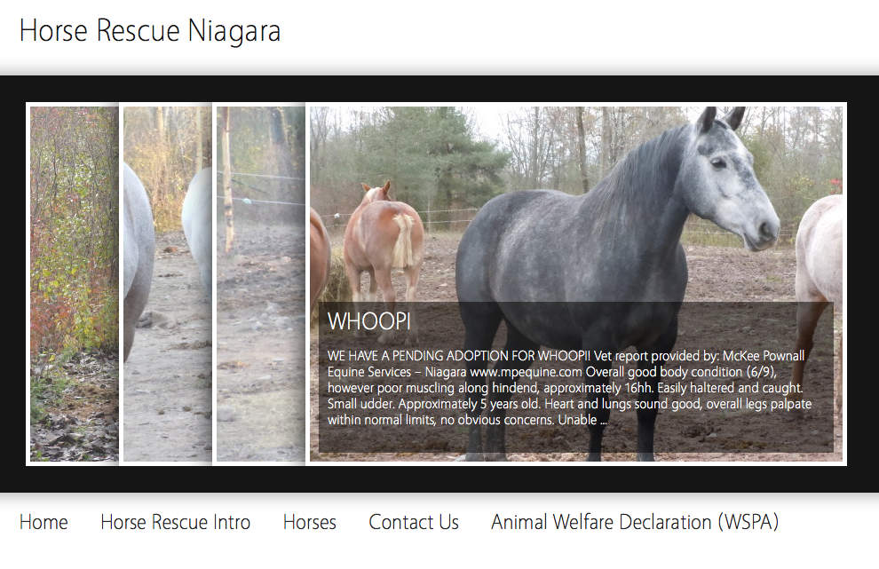 The beautiful website that was created practically overnight for these horses!