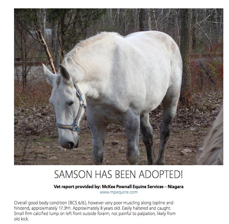 7 of the 9 horses have been adopted so quickly - after being vetted, profiled and photographed so well.