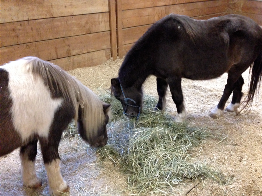 Here they are... totally happy together in a stall for a week.