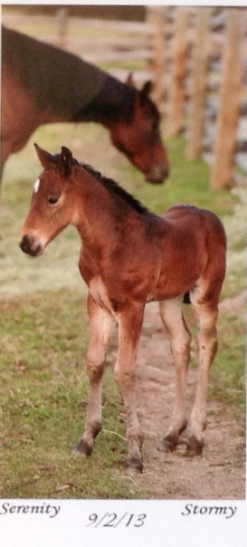 I don't remember meeting this mare but I sure would like to meet this strong looking foal!