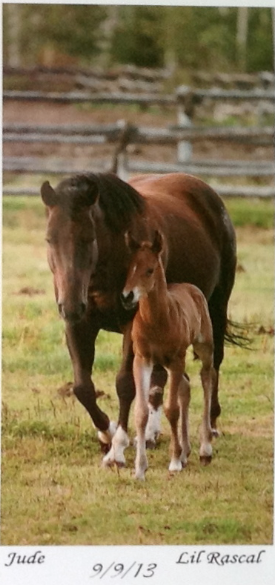 Of course, I'm drawn to any rascally foal!  Gorgeous again!
