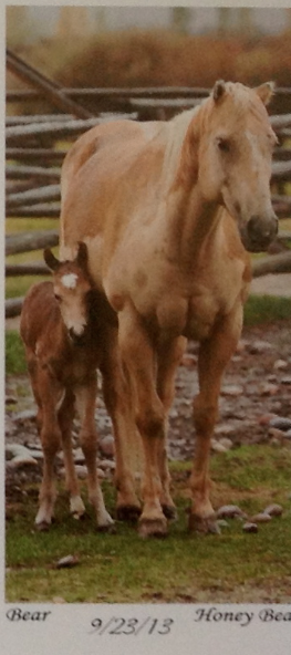 This is her baby.  The last to foal.  What a cutie!