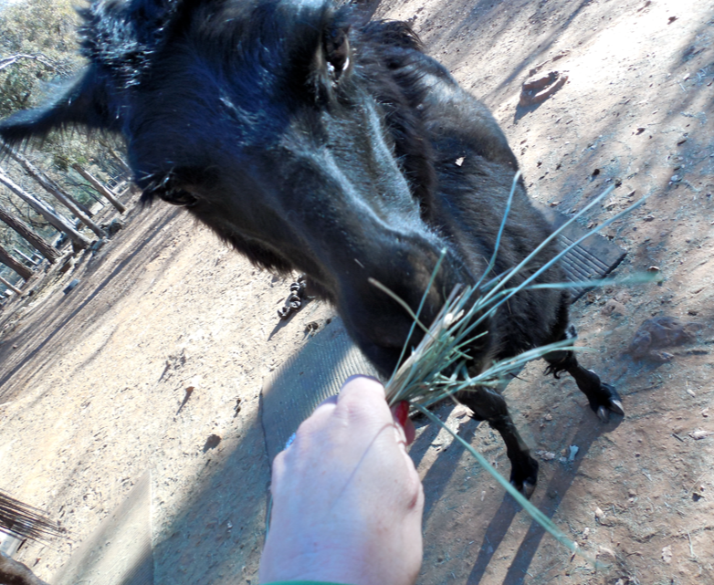I fed her hay, blackberry bush leaves and rose petals... all her favs