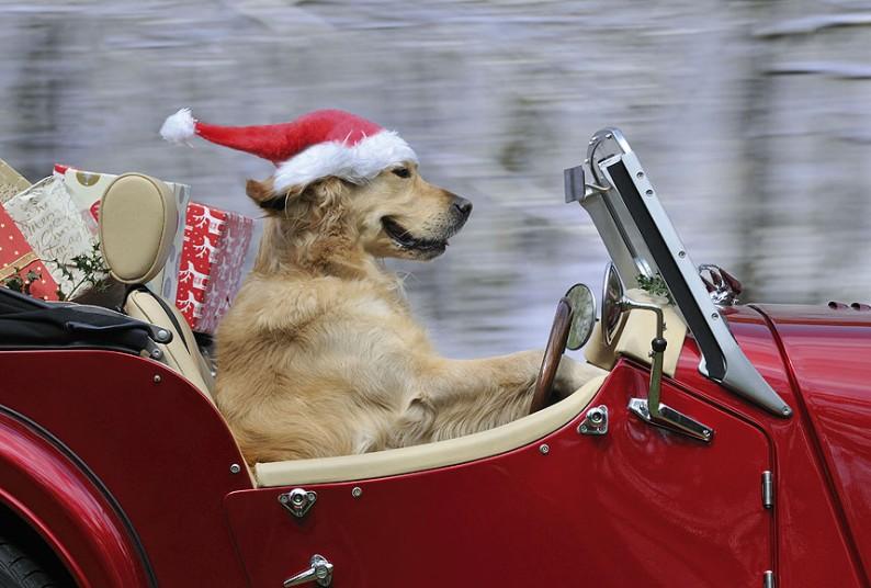 Dogs_in_Hats_Decem_2737703k