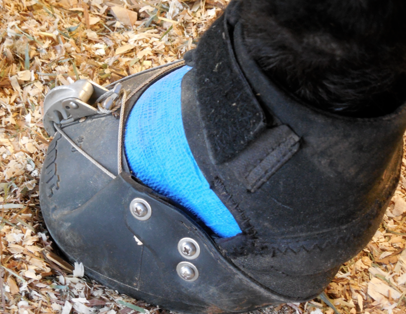 This is her neatly wrapped hoof, full of Team Tess!