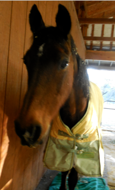 Not the best photo of our girl.  The light was going... As you can see, she is sporting HorseAngel Aladdin's heavy blanket.  He passed suddenly and this blanket was almost new.  It was difficult to see it on her but I hope it carries him with it - I hope he is helping in his way.