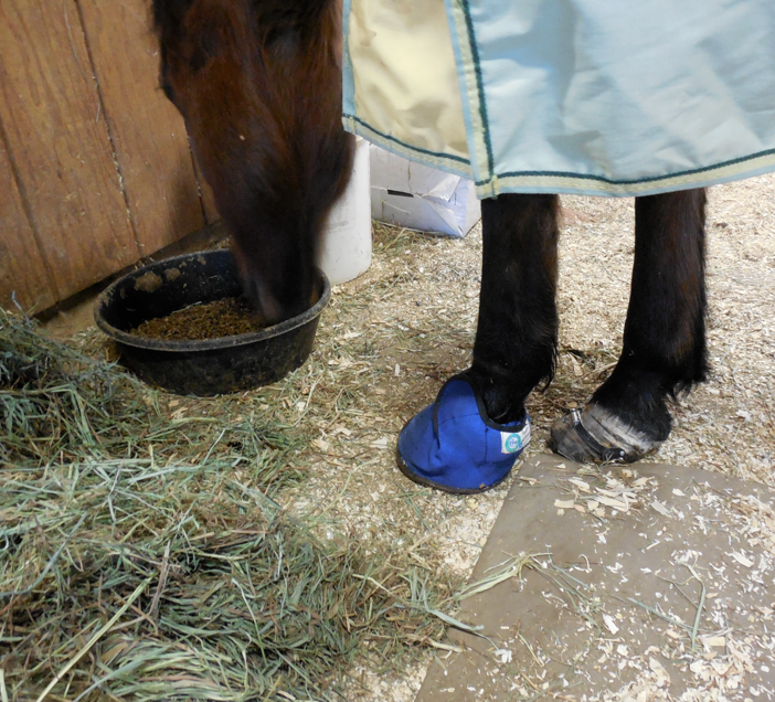 For me, the Equine Slipper is the most effective boot.  It doesn't come off and the insert fits well. And, it is flush to the ground.