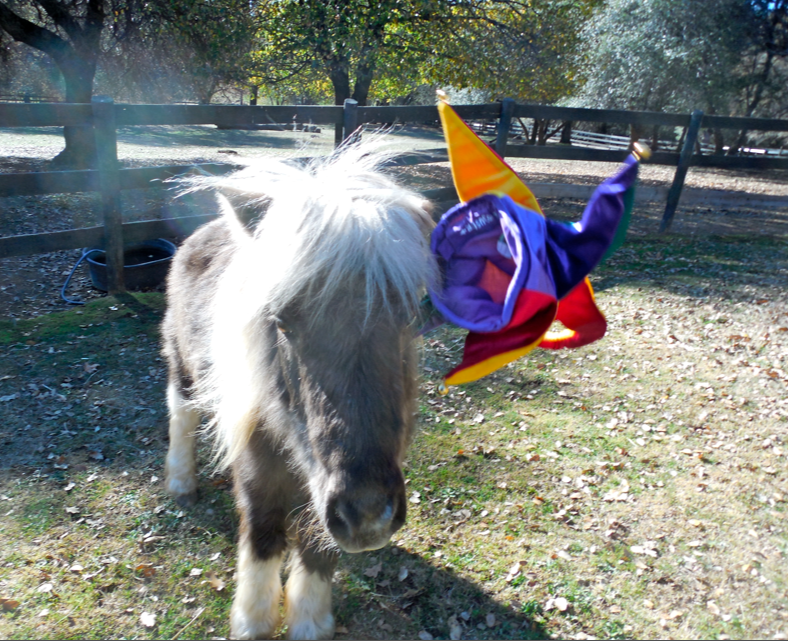 Slick refused to wear it and tossed it dramatically - kinda cool how he barely moved his head but the hat went flying!