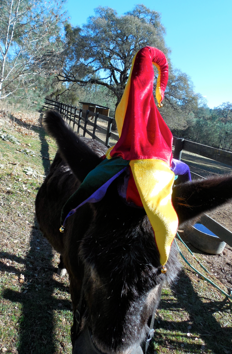 """Norma (the donkey) wore it but kept walking into me and headbutting me as if to say, """"Really?  Do I deserve this...?"""""""