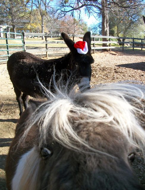 This is my Norma Jean in her Santa Hat - and my pony photobombing her!