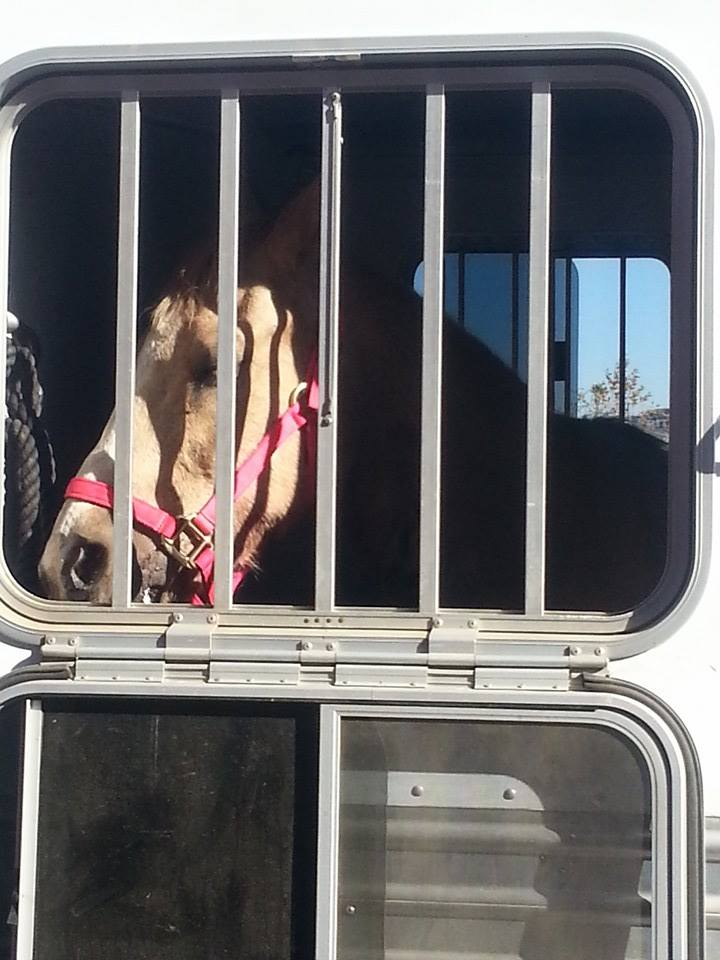 This is Xena, on her way to a safe place to be worked on by volunteer vet, Bryn.