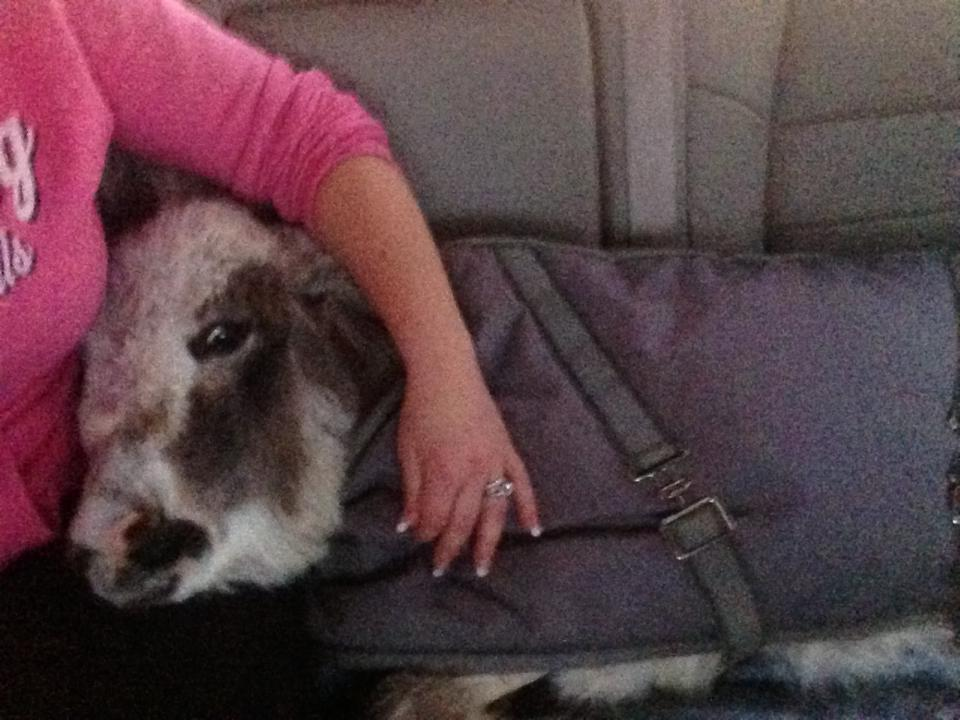 Bella with her rescuer during the long ride to Wyoming... very sweet.