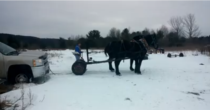A wonderful and practical way for horses to help their owner...  click image to watch!