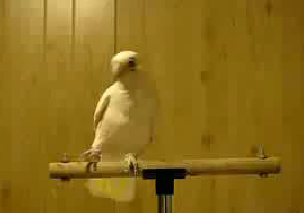 If this doesn't make you smile, nothing will.  Click image to watch this crazy bird dance to Ray Charles!