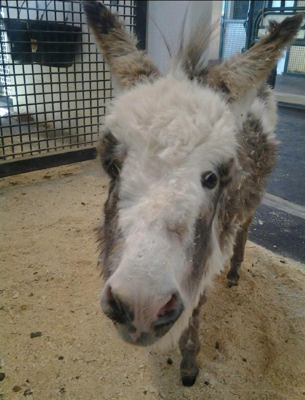 Bella is our February Bucket Fund Foal!  Click image to read her story!