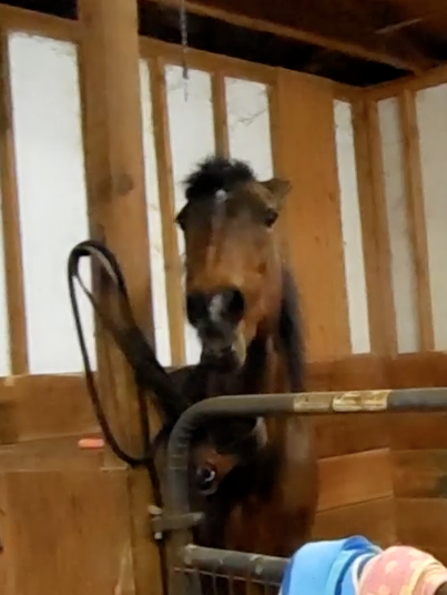 Mama Tess shows her distaste of sharing her barn with the ponies!