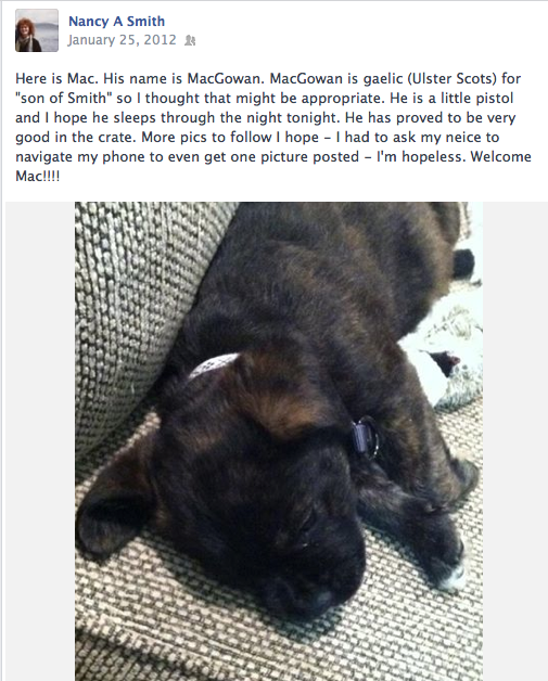 Shortly before Nancy passed suddenly, she had adopted this puppy... (the puppy now lives with a family friend.)