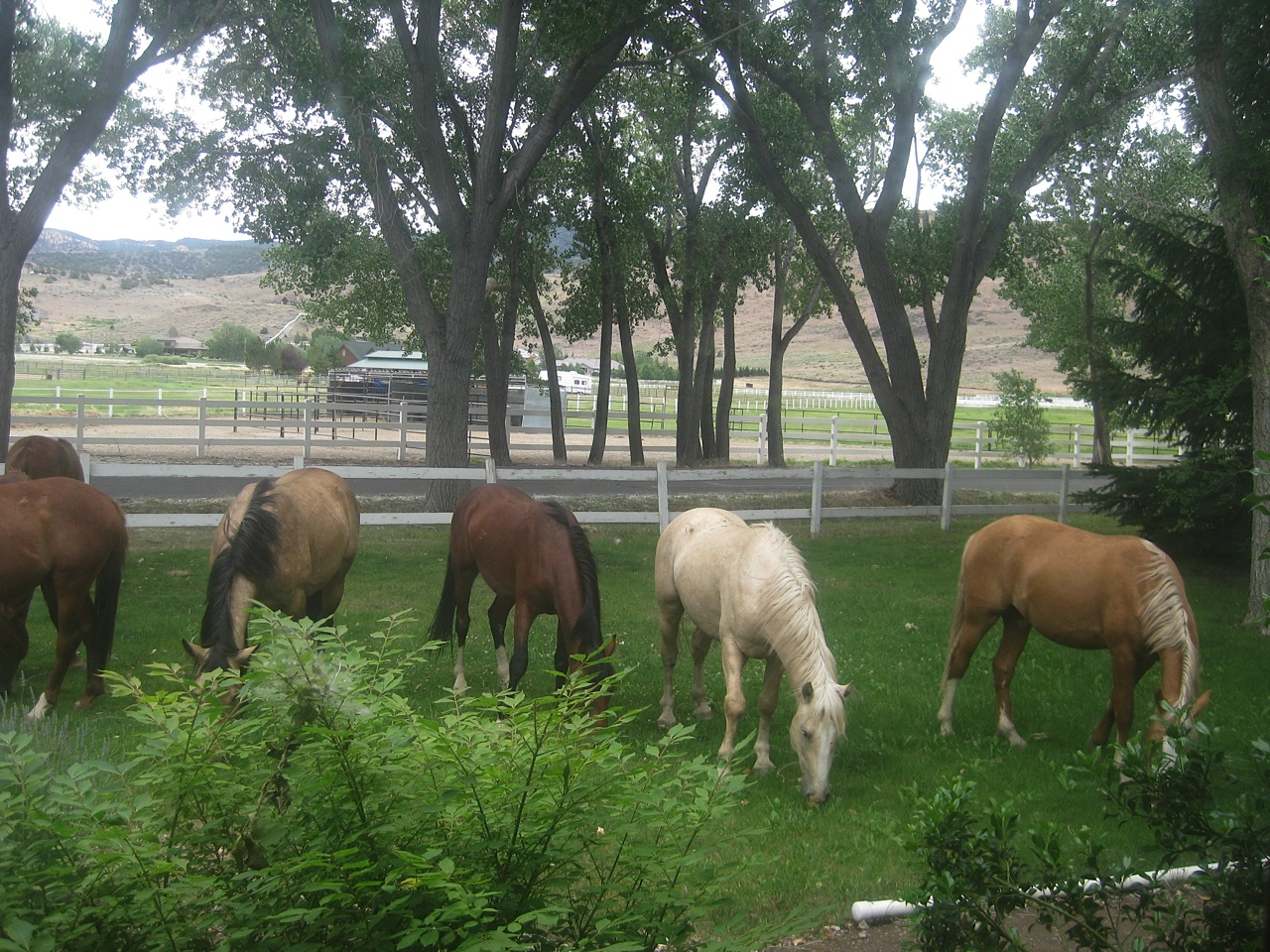 Please consider these guys!!!  MARCH BUCKET FUND:  RHODES ROAD BACHELOR BAND OF 8 WILD HORSES PLUS ONE LONE STALLION! - CAN WE HELP THEM GET OUT OF JAIL?!  THEIR townspeople are gathering resources to house, feed and gentle them!