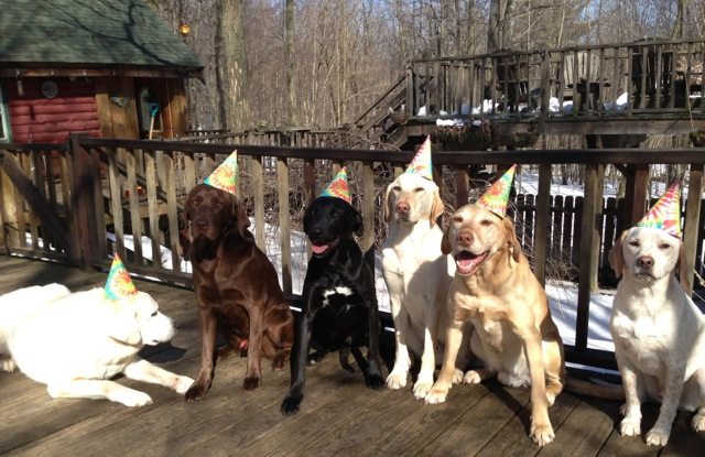 i could never get my dogs to wear hats, let alone sit still for a photo... Bravo!