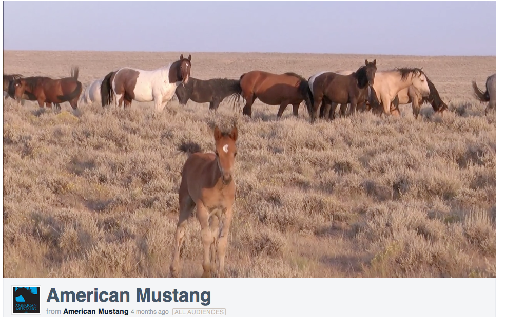 Click image to watch the trailer for the movie, American Mustang.
