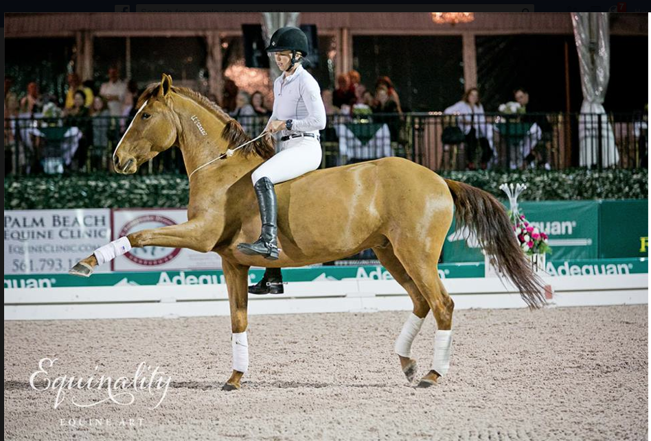 Click image to watch Elisa ride her awesome Mustangs at the Dressage Festival - at liberty!