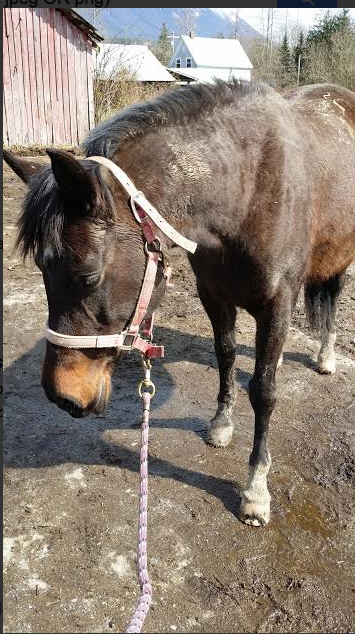 APRIL BUCKET FUND are all the displaced horses from the WA mudslide!