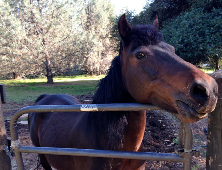 Gwen acts like a crazy horse willing to hurt herself if she isn't given a bucket - NOW