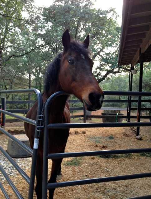 She looks longingly at the hay barn.