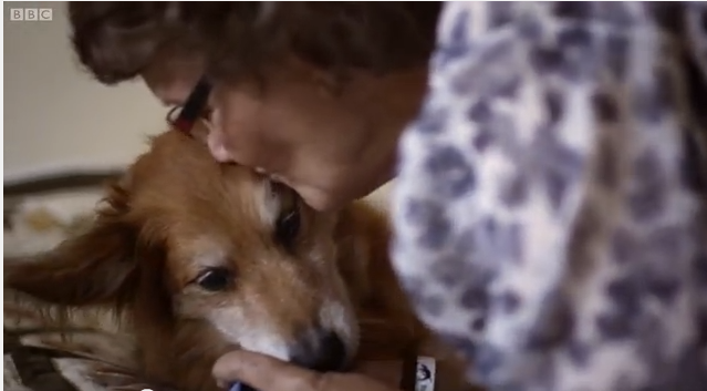 Click image to watch about a dog who saved his Human...