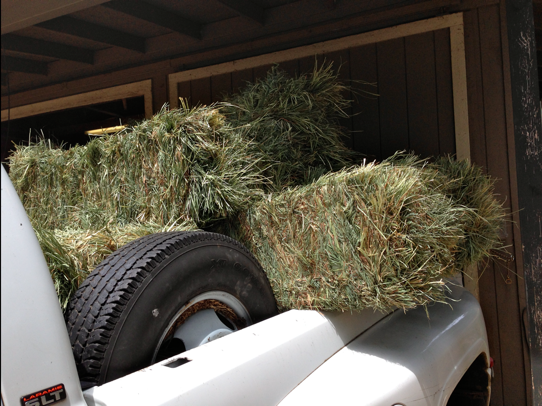 I used to purchase 80 bales at a time.  Now, I cannot get any grower to sell small amounts like 80 bales - so I have to go to regular feed stores where one bale of Orchard grass is $23.10.  No wonder California horses are in crisis and sent to feedlots.