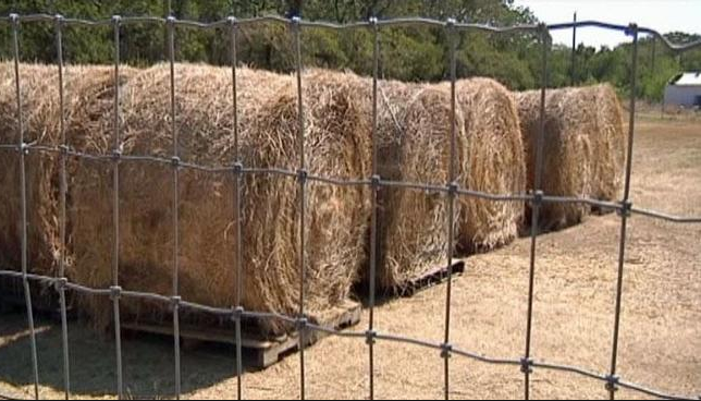 Hay is so expensive, it is like a controlled substance.
