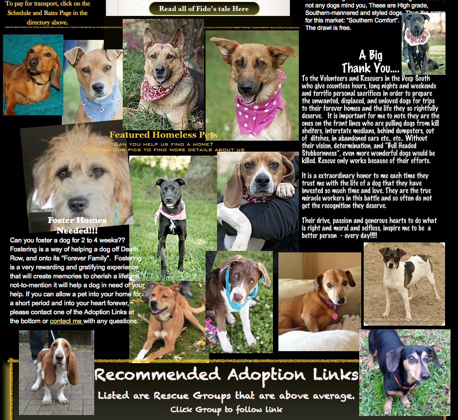 Here are some dogs at the Pick-Up shelters/fosters that need homes... Anyone for you?