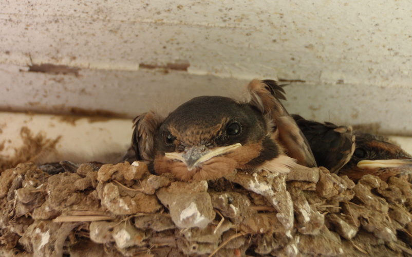 The nest looked a lot like this.