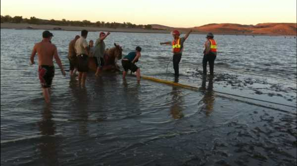 LRTC rescuing a horse in high water using their former flotation device.