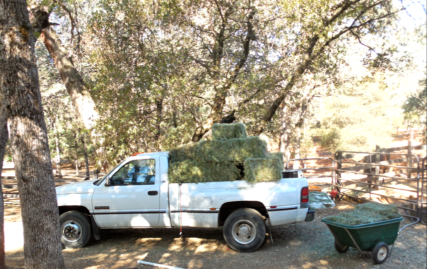 The truck... full of hay.