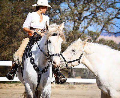 This is a photo of Leslie riding Sam.  The other horse is her gelding, Oscar.