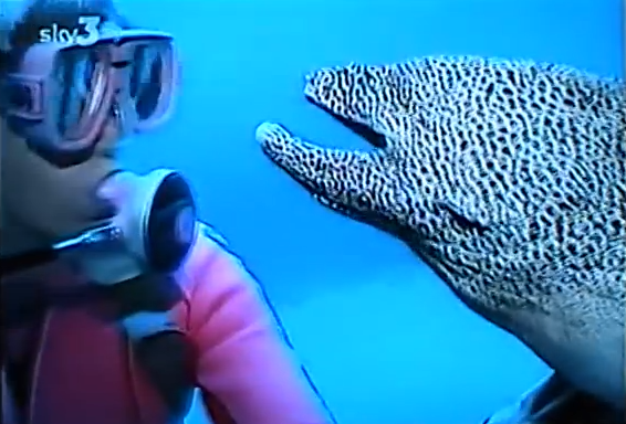 Click image to watch the eel and the diver.