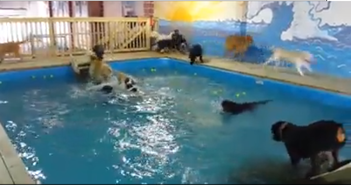 Click to watch these dogs having SO MUCH FUN in the pool!