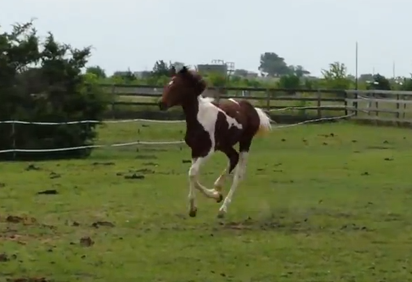 Click image to watch a video of Aria running!